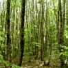 Gecertificeerde bos