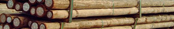 Cloeziana hout