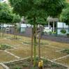 boompalen geschild