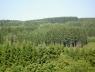 duurzaam-bosbeheer-in-de-ardennen