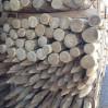 acacia palen gepunt