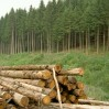hout oogst