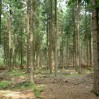 naaldhout bos