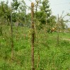 fruitboom palen