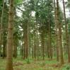 naadlhout hout op stam