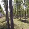 Duurzaam beheerd cloeziana bos