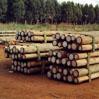 Eucalyptus houten palen