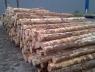 cambio-geschild-naaldhout