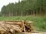 hout-oogst